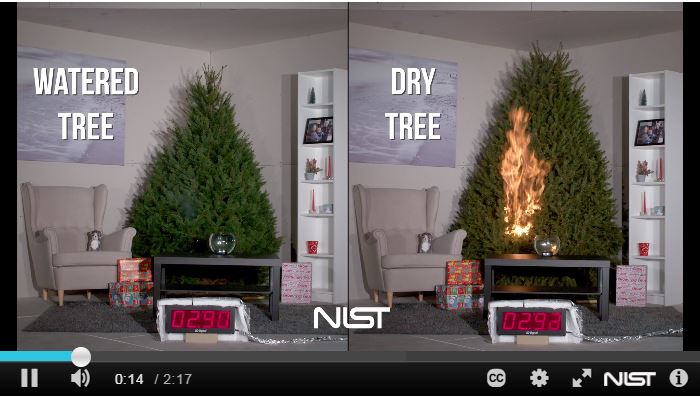 Christmas Tree Fire Video - click to watch